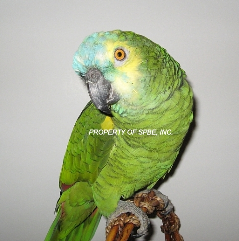 Society of Parrot Breeders and Exhibitors